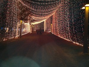 tunnel of LIGHTS - tejas